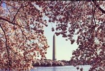 Cherry Blossoms / Bonded by a tree rooted in culture and tradition, The Ritz-Carlton hotels in Washington, D.C and Japan celebrate Sakura, or Cherry Blossom season, with some truly enticing experiences. The National Cherry Blossom festival in D.C. marks the beginning of spring, drawing admirers to prime viewing spots near the city's monuments. In Japan, Sakura season begins as early as January on the island of Okinawa and extends into early April throughout Tokyo, Kyoto and Osaka.