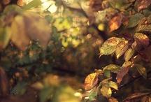 Autumn  / by Echo Autumn