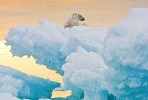 Ice / by Jenny McEwan