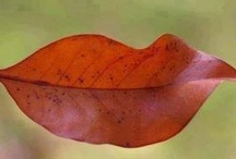 Bloom and Leaf