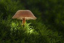 Fascinating Fungi / by Lia Hunter