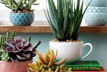 House Plants  / I want the green thumb