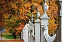 fall into autumn / by Elizabeth A