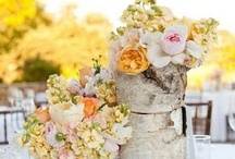 Centerpieces / Rustic inspired wedding centerpieces. / by Kingdom Wedding Photography by Kat