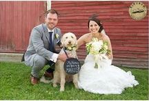 Furry friends / Wedding couples and their dogs. Dogs as part of the wedding day.
