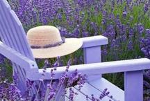 garden seats / by Elizabeth A