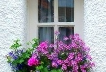 window boxes / by Elizabeth A
