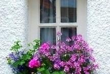window boxes / by Elizabeth A