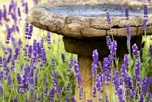 garden water features / by Elizabeth A
