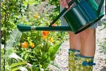 Gardening / by Alicia Darr