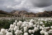 Travel: Iceland / by Dmitri Korobtsov