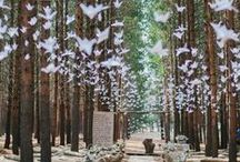Forest Wedding Inspiration / Forest Wedding Inspiration Forest Wedding Ideas Forest Wedding Theme Forest Wedding Styling Forest Wedding Decor Forest Wedding Examples Forest Wedding Photos Woodland Trees Outdoor Wedding by Sail and Swan