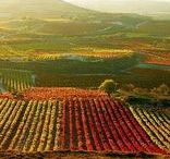 Spanish Wine News/Education