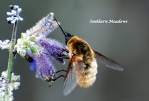 Southern Meadows / This is my blog where I share my experiences gardening for wildlife using native and friendly non-native plants. I hope you will join me on my voyage as I view it through my lens.