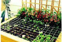 Greenthumb the Garden
