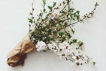 flowers / by lauren ellwood