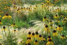 Gardening: Plant Pairings
