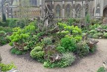 Garden: Stumpery / An intentional arrangement of woody material like tree trunks and root wads that serve as structural elements for plants in a shade garden