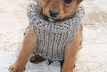 tiny dog sweater / Ima gonna knit you a sweater!