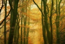 Polish Golden Autumn / the very beautiful season in Poland (not only because of colours;) )
