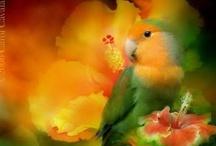 BIRDS , birdies.. /      flying and not flying