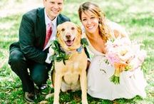 Wedding Dogs / How to make your dog a part of your special day!
