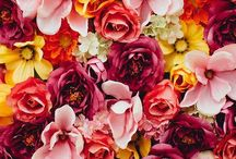 Blooms and Bouquets / There is something about blooms and pretty bouquets that puts a smile on my face every time:)