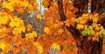 EsTAÇõeS ANo:  Outono
