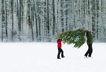 Christmas / Christmas holiday season, baking, trees, ornaments, family, snow, joy and cheer