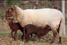 Animaux de Marcheval / Découvrez les animaux que vous pourrez voir à Marcheval ! Discover the animals of Marcheval now !
