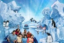 SeaWorld's Antarctica : Empire of the Penguin