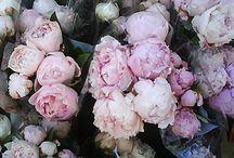 Fleur / by Lauren Daniel