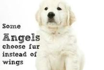 Dogs / I love dogs <3