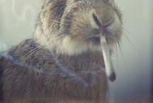 Smoke  / by Micaela Reis