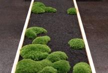 苔  moss / by Hitomi Yoda