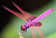 Dragonflies, Butterflies & Such / Air Spirits / by Rhonda Sandoval