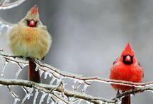 Fair-Feathered Friends / by Rhonda Sandoval