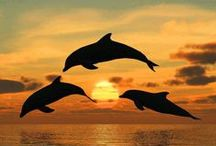 Dolphins, Whales & Manatees / by Rhonda Sandoval