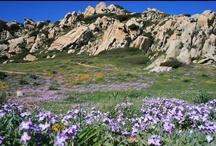 Sardegna in fiore