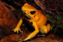 International Species Days / by World Land Trust (WLT)