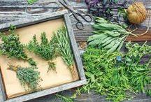 DIY: herbs
