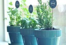 6 | Gardening