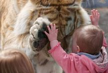 Lions, Tigers, & Bears Oh my! / by A.J Quinn
