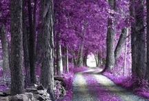 Purple / by Victoria Rhoads