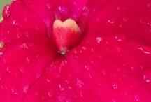 Valentines / Corazones, naturaleza,  Corazon, amor, naturaleza, sentimiento, dia de san valentin
