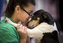 Animals / Long Island's sometimes furry, lovable friends.   / by Newsday (Long Island)