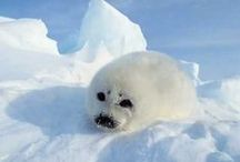 Arctic & Antarctic UNIT / Links, crafts, and articles related to a unit on cold  climates