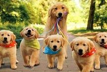 Walk With Your Pet! / by Every Body Walk!