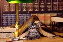 libri,librerie, biblioteche e dintorni... / design, home decor,  fantastic landscapes......protagonists only the books!!