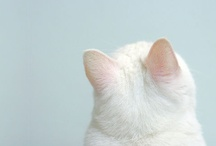 cats / by Sharlene Redwood